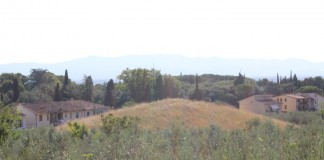 Tomba Etrusca la Montagnola