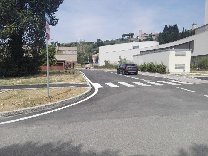 Calenzano - pino
