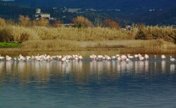 Lago fenicotteri