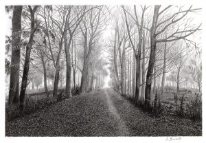 Strada nel bosco (Buonavita)